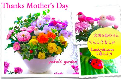 【母の日ギフト 鉢 花】母の日かわいい人気カーネーション&嬉しいハーブ花鉢植えプレゼント(送料無料)