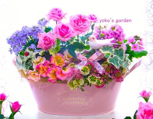 花 プレゼント オシャレ*夏のミニバラ花鉢ギフト(祝福バード付き)