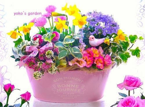 花 プレゼント オシャレ*早春のスイセン花鉢ギフト(祝福バード付き)