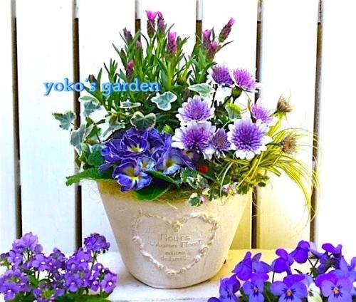 花 プレゼント ラベンダー*春のサムシングブルー花鉢植えギフト