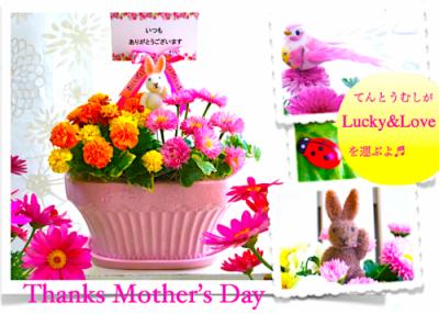 【遅れてごめんね母の日 】こだわり陶器のおしゃれ花鉢寄せ植えギフト-Candy Pink-(送料無料)