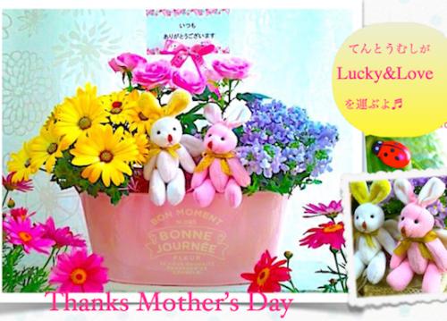 【母の日 バラ 鉢】可愛く華やかなバラ寄せ鉢ギフト-Rose Basket-(送料無料)