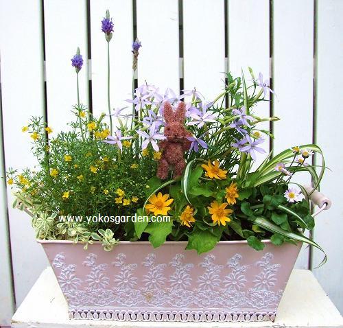 夏のラベンダーの豪華な寄せ植え - 花プレゼントは人気の ...