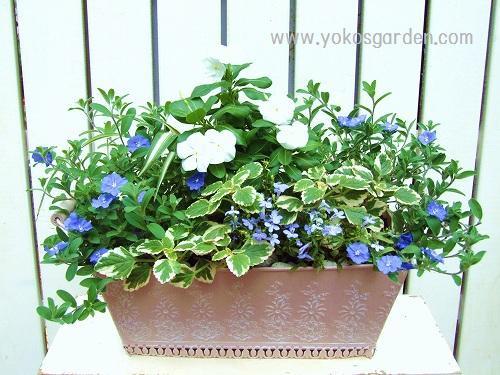 画像 : 寄せ植え花壇の作り方 (プランター 鉢 画像 ブログ 方法 ...
