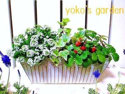 花プレゼント*ワイルドストロベリー&お花のHAPPY SET!!