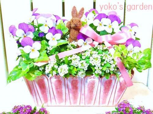 感謝価格!!花プレゼント*良く咲き続けるビオラの寄せ植え(ウサギのピック付き)
