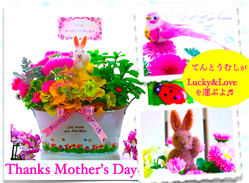 【母の日 鉢 花】母の日人気カーネーション&ハーブ花鉢寄せ植えギフト-Garden Party-(送料無料)