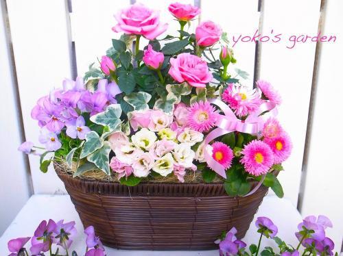 バラ 鉢植え ギフト*上品で華やかなバラの寄せ植えギフト(送料無料!!)数量限定