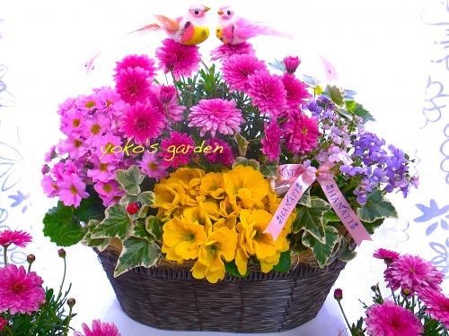 花 プレゼント 人気*冬のMarriage花鉢ギフト(送料無料)