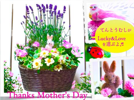 【母の日 鉢 人気】母の日おしゃれラベンダー&カーネーション寄せ植え-Elegant Lavender-(送料無料)