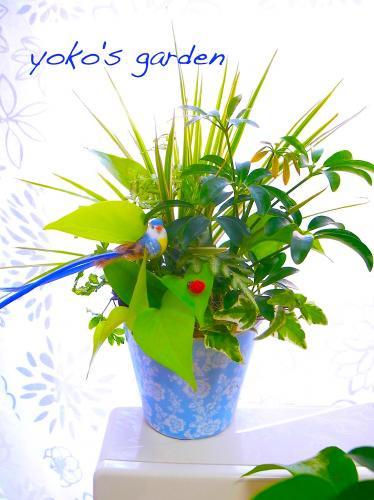 観葉植物 人気*観葉植物おしゃれギフト (祝福バード付)