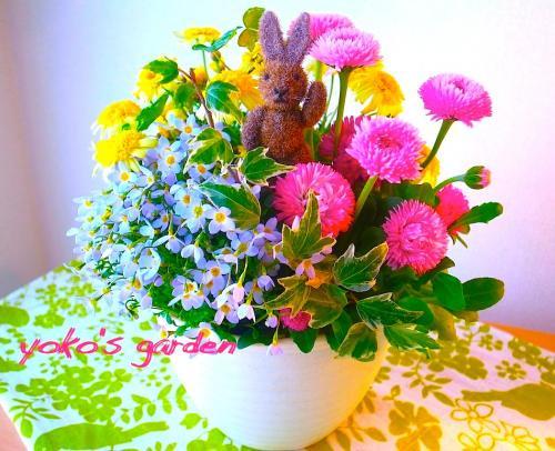 花プレゼント人気*かわいい冬の花鉢ギフト寄せ植え(送料無料)(受け皿付き)