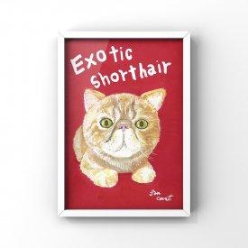 【L判額付き】絵の具アニマル「Exotic shorthair」