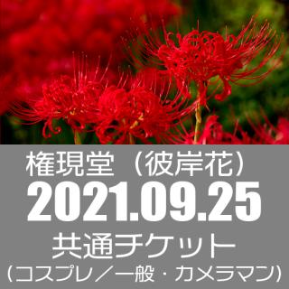 09月25日(土)開催『Cocofuri No room at 権現堂(彼岸花)』
