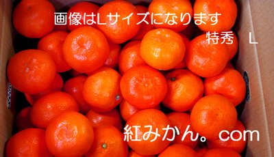 完熟山下紅みかん5キロ箱・赤秀・L