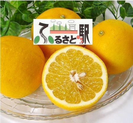 熊本産ジューシーオレンジ(8kg)  期間限定 熊本植木発 ふるさと駅●九州産直品●事前振込