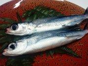 犬猫の手作りご飯におすすめの魚「とびうお 3尾」