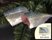 犬猫の手作りご飯におすすめの魚「真サバのフィーレ」