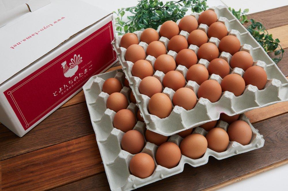 とよんちのたまご 王卵 40個入り