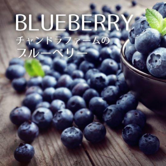 ブルーベリー500g(125g×4パック)クール便 送料一律660円