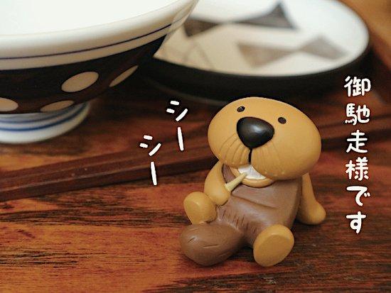 【Decole(デコレ)】HIGE RACCO おじゃましてま〜す&食後のシーシー