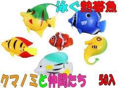泳ぐ熱帯魚 クマノミと仲間たち 【単価¥16】50入