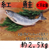 【紅鮭 約2.5kg】