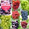 清水ぶどう園 ぶどう3〜4種類詰合せ2kg (欧州系・欧米系 食べ比べ)