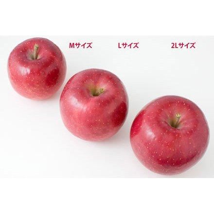 リンゴサイズ比較2