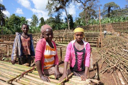 エチオピア グジ地区 バンティ・ネンカBENTI NENQA農園 ナチュラル  フルーティ
