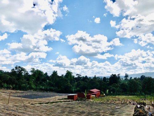 エチオピア グジ地区 バンティ・ネンカBENTI NENQA農園 ナチュラル  ダークロースト