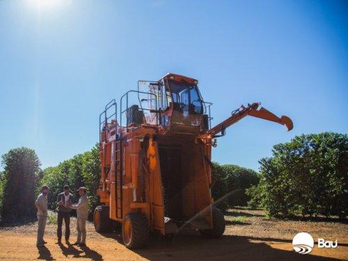 ブラジル バウー農園 トミオ・フクダ ドライオンツリー