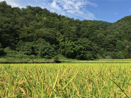 無農薬玄米(コシヒカリ)30k