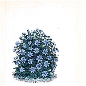 Marihiko Hara /  Flora