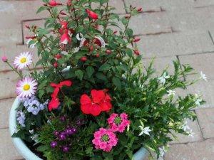 季節の花の寄せ植え(大)