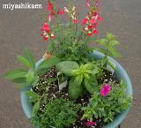 花とハーブの季節の寄せ植え