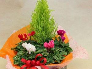 ガーデンシクラメンの花カゴセット(小)