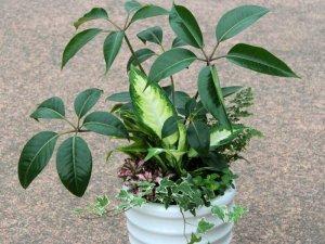 観葉植物の寄せ植えL