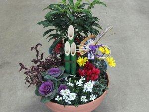 ミニ門松の迎春の寄せ植え