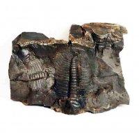 レプリカ・化石・置物