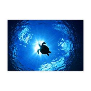 オリジナルプリント「Flying Turtle」