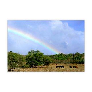 オリジナルプリント「Happy Rainbow」