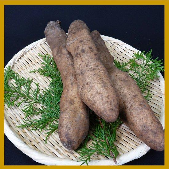 自然薯500g~550gと山の芋950gのセット2750円