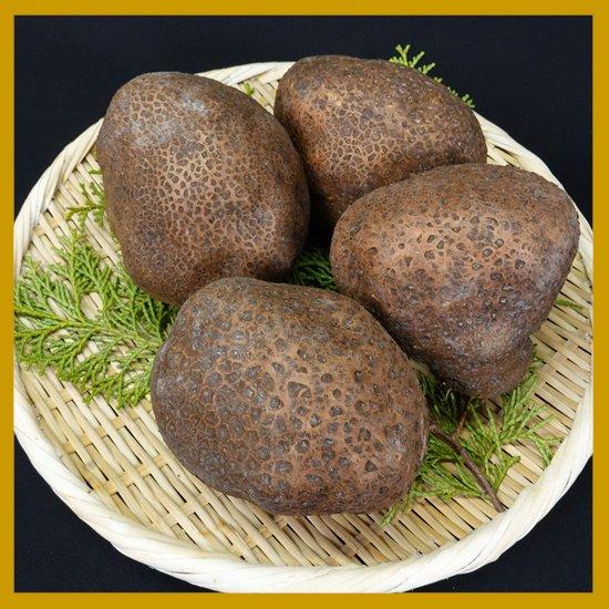 山の芋 箱入り 2kg 特秀品(一個350~449g) 4~5個入り