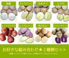 【20kg】北海道美瑛町産じゃがいも2種類詰め合わせセット(サイズ混合)