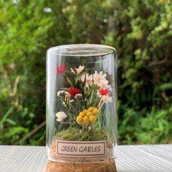 野の花 ハーバリウム・植物標本