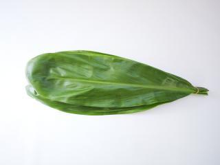 TI-Leaf 100枚