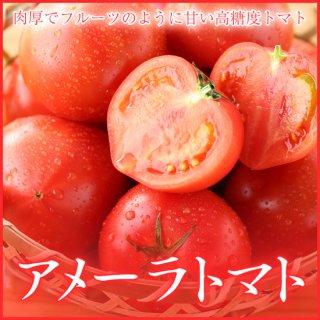 アメーラ トマト 秀品 Mサイズ 約12玉入り 約1kg 高糖度フルーツトマト化粧箱入り 静岡県産・長野県産