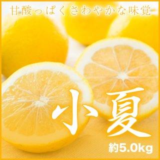 高知県産  『小夏』  風のいたずら(ちょっと訳あり) 大きさおまかせ (約5.0kg) 箱入り
