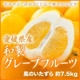 愛媛県産 『和製グレープフルーツ』 風のいたずら(ちょっと訳あり) 大きさお任せ(約7.5kg)